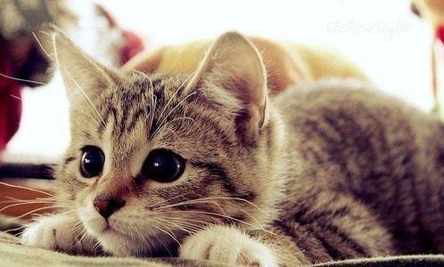 gato-atento