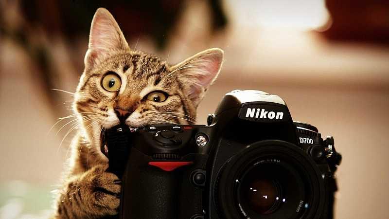 comportamiento-gatos
