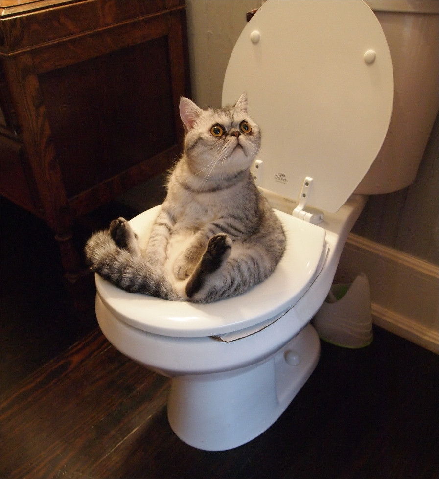 gatos-lavabo