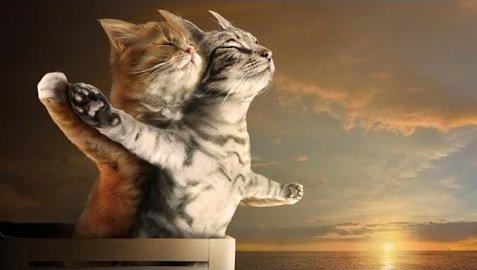 gatos-graciosos