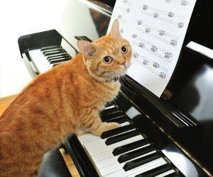 gato-piano