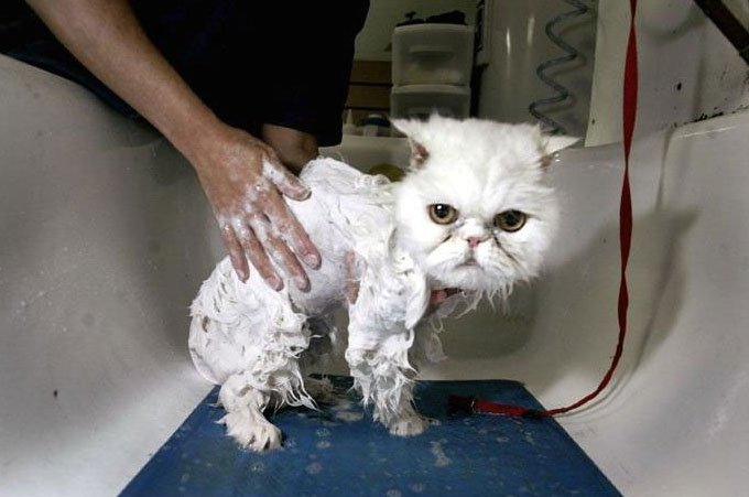 gatos-bañar