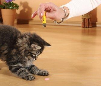 gatos-laser