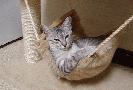 hamacas-gato