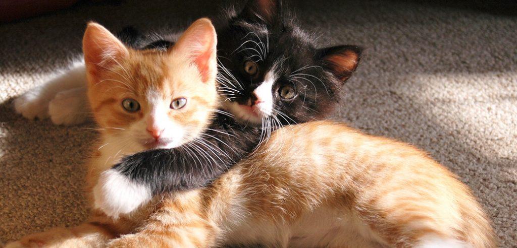 informacion-gatos