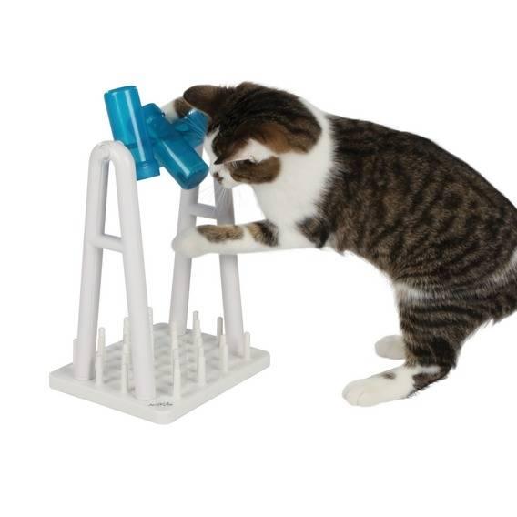 juego-inteligencia-gatos