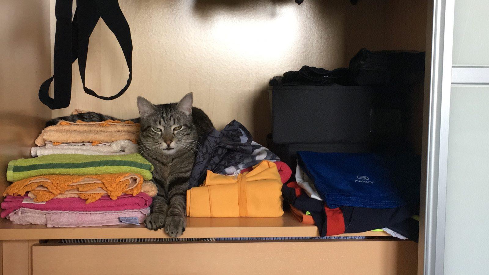 gato-armario