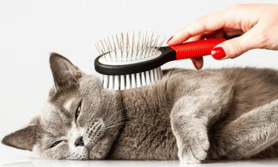 cepillar-gato