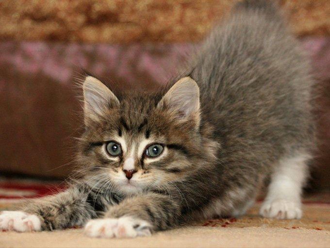 fotos-de-gatos