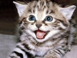 gato-mau-egipcio