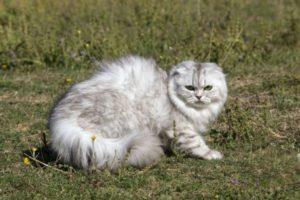 gato-highand-fold